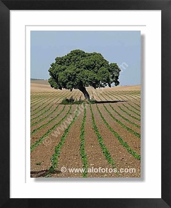 paisajes con árboles