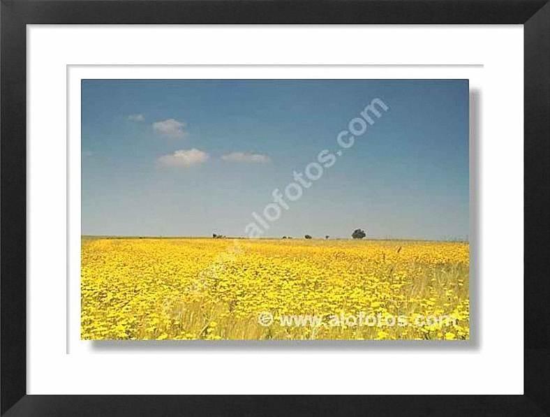paisaje, flores, primavera, naturaleza