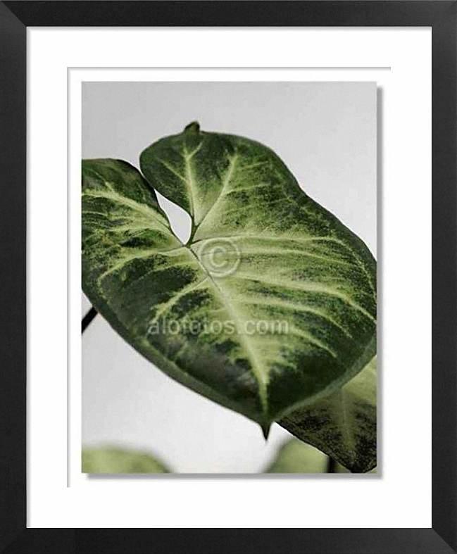 Plantas ornamentales interior pic 16 for Plantas ornamentales de interior