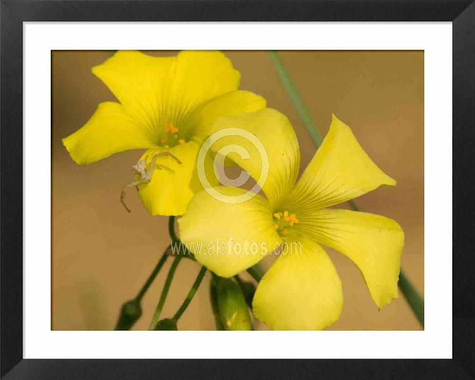 Flores amarillas con araña