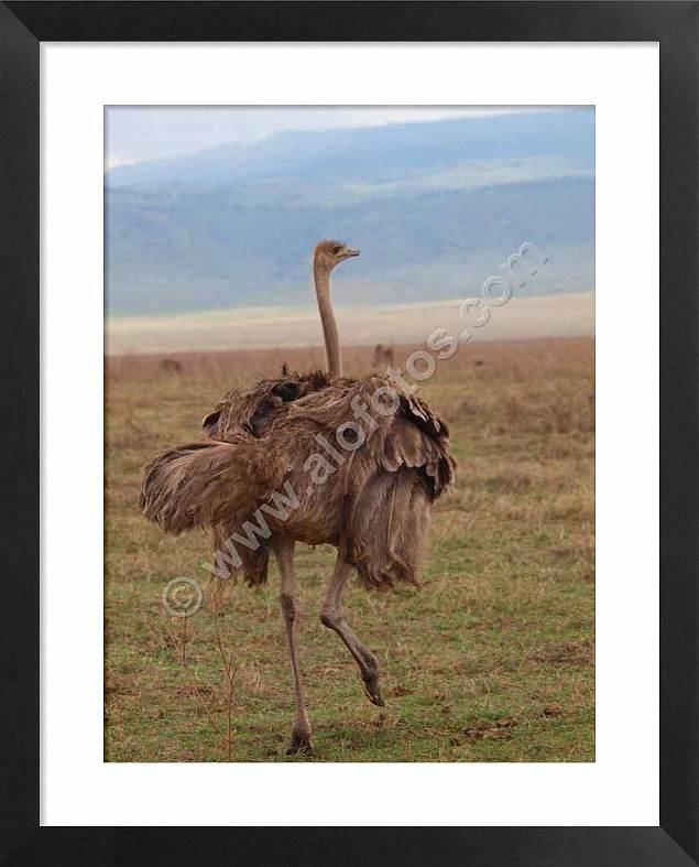 Aves de Africa