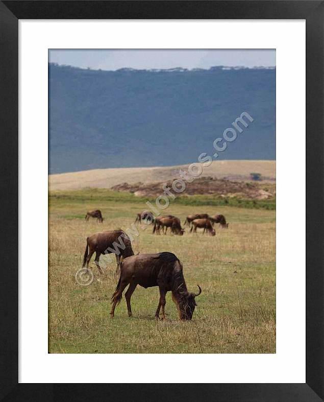 fauna de tanzania