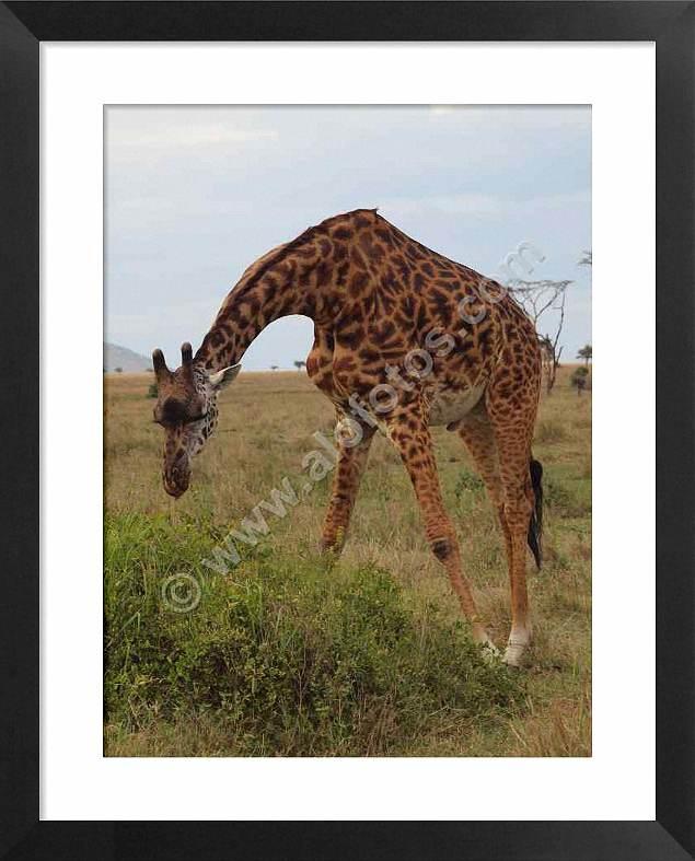 fauna salvaje de Africa