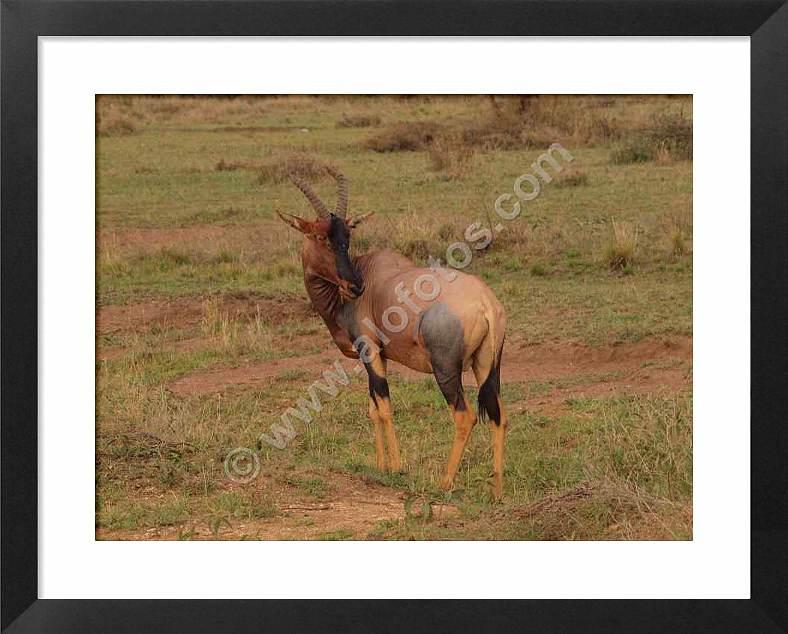 animales vertebrados de Africa