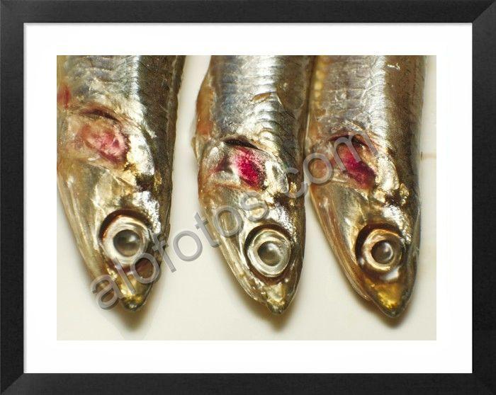 peces comestibles