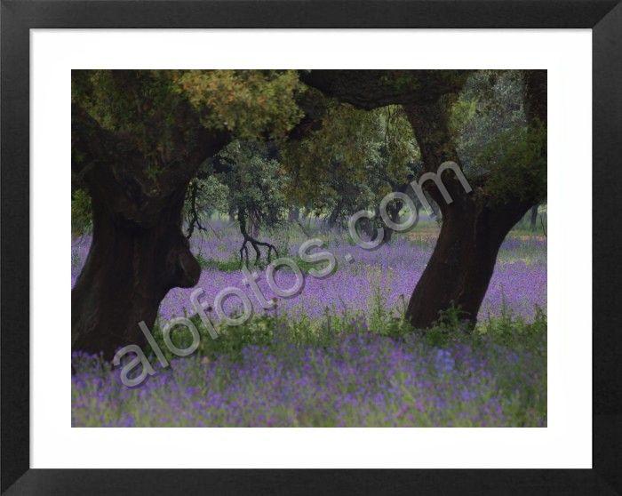 paisajes e imágenes naturales