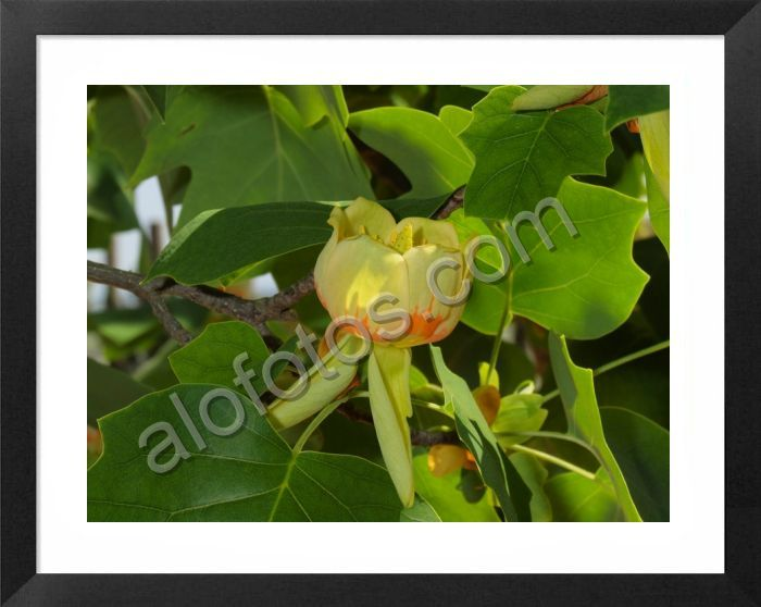 Fotos de plantas ornamentales ejemplos tipos y nombres for Ejemplos de plantas ornamentales