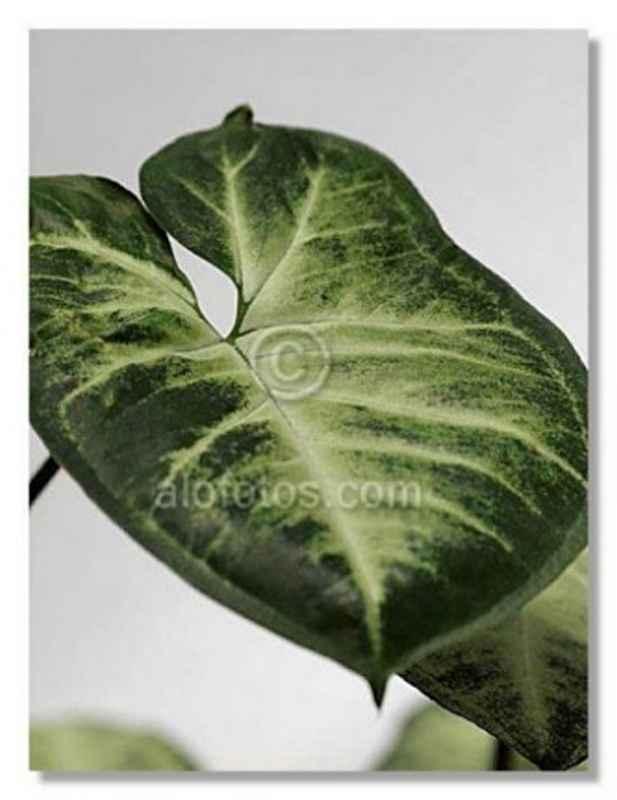 Plantas de interior decoracion y interiores pictures - Plantas d interior ...