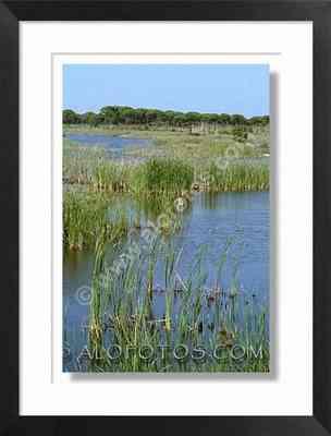 Parque Nacional de Doñana - ecosistema