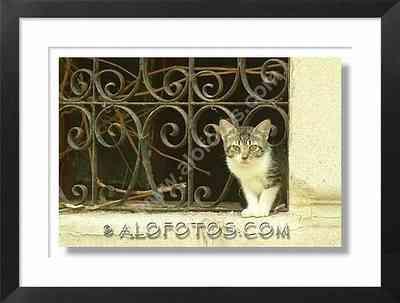gato vagabundo