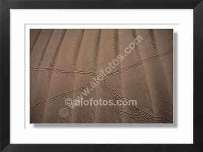 Huellas de insectos, dunas