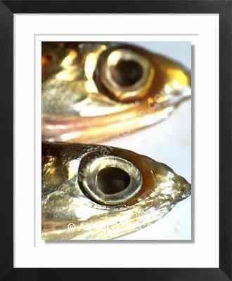 boquerones, anchoas