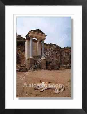 perro, templo