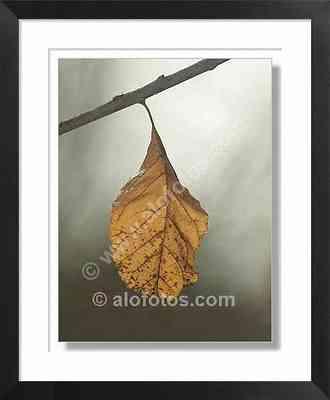hoja, otoño,