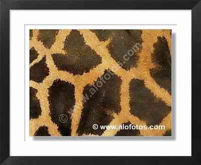 dibujos de la piel de una girafa, animales, dibujos girafas