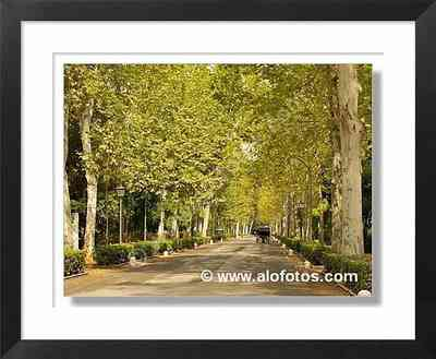 paseo, Parque de Mª Luisa