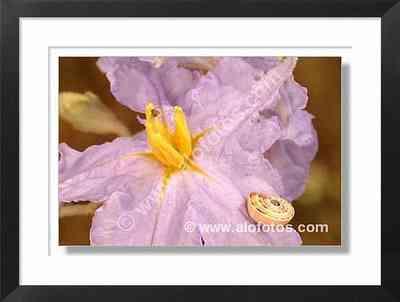 caracol sobre flor