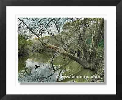paisajes, río, agua