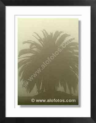 paisaje, palmera