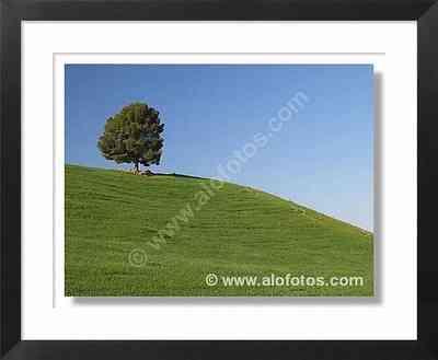 paisajes, árbol - campos de cultivo