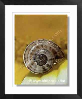 caracol, animal