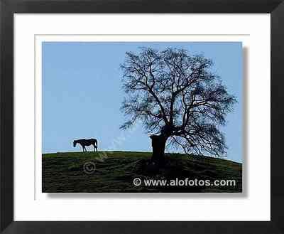 caballo, paisajes