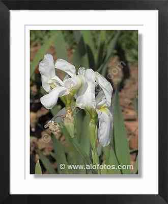 jardines, flores blancas