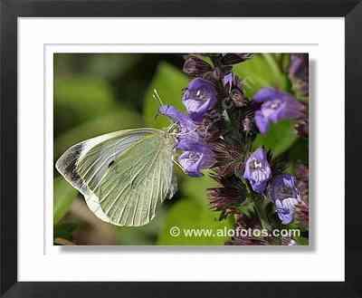 mariposa sobre plantas aromaticas
