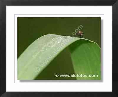 naturaleza, mosca
