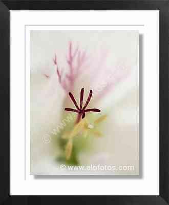 blanco, flor