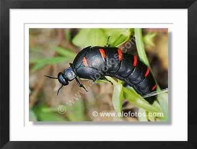 insecto, escarabajo