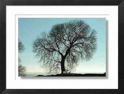 silueta, árbol
