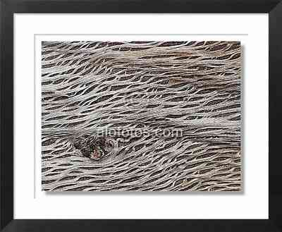 textura, tronco de un alcornoque