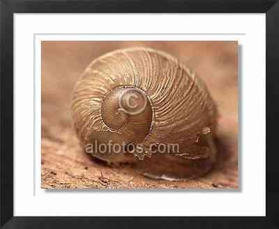 Espiral, caracol