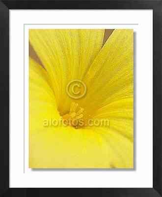 flor amarilla, lino