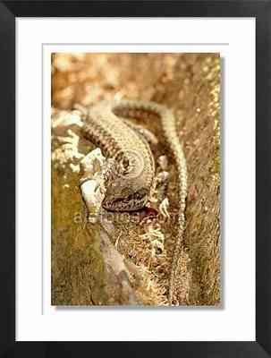 reptil, lagartija
