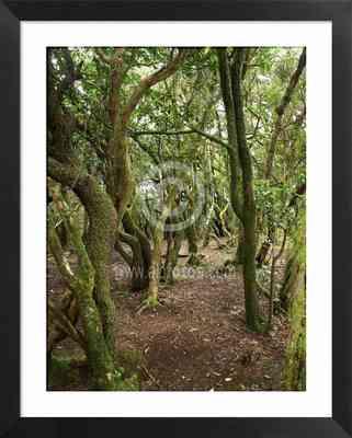 Garajonay, fotos de parques nacionales