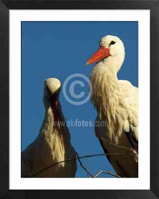 Aves migratorias, fotos de cigüeñas