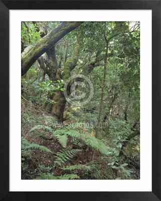 laurisilva, paisajes naturales, fotos de bosques