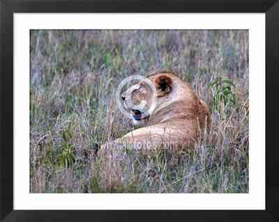 Animales de Africa. Serengeti, Tanzania, fotos de animales peligrosos