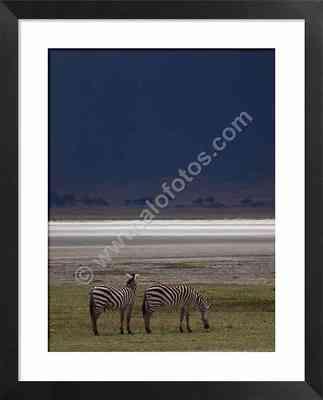 cebras, fotos de animales del crater del Ngorongoro