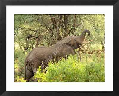 animales grandes, fotos de elefantes