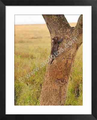 leopardo joven, fotos de animales en peligro de extinción