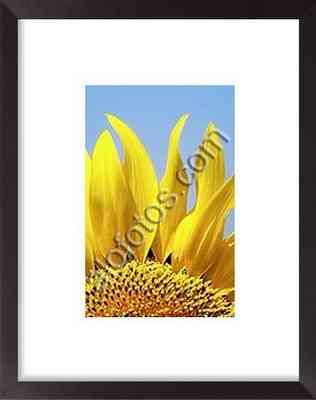 Detalle de las flores de un girasol