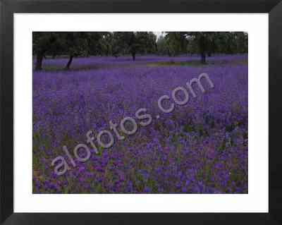 dehesa en primavera, paisaje natural con flores