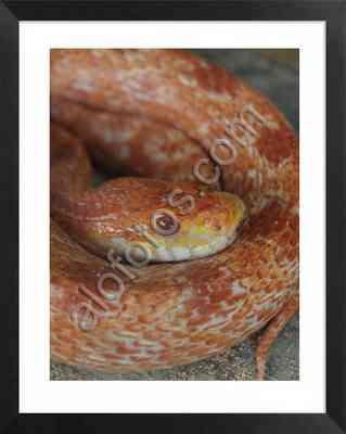 las serpientes pueden ser animales peligrosos