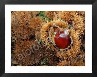 castañas, frutos silvestres de otoño