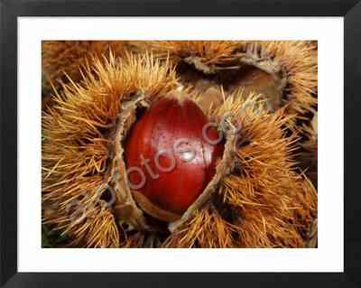 castañas, fotos de frutos de otoño