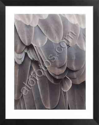 textura natural de las plumas de un buitre leonado